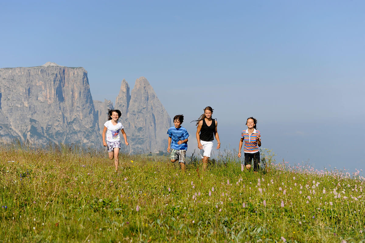 Flower meadow on Alpe di Siusi in the Dolomites